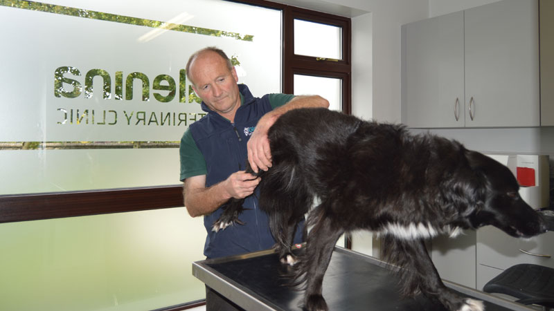 Philip McManus Medical Diagnosis Glenina Vets